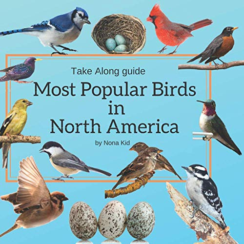 Most Popular Birds in North America: Bird Watching Guide for Kids